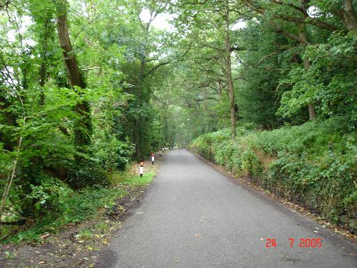 Tree covered lane in Conwy