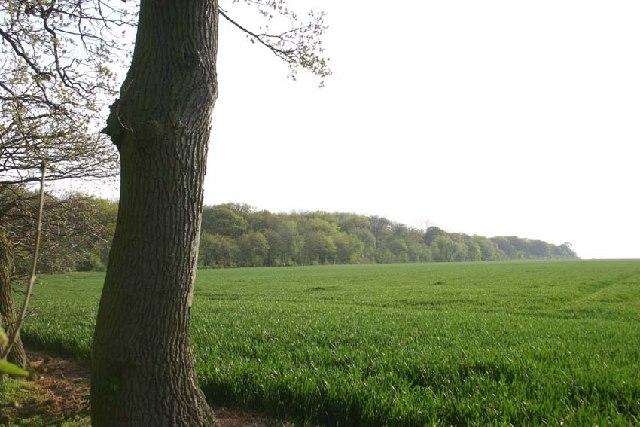 Hayley Wood - field boundary