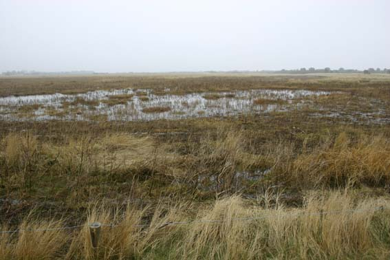 Saltmarsh at Gibraltar Point National Nature Reserve