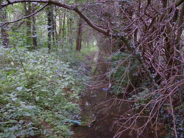 Woodland near Denton Reservoir