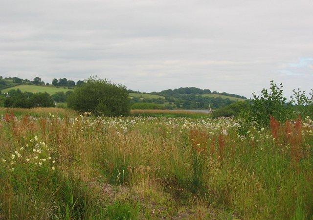 Wetland flowers, Castle Semple Loch