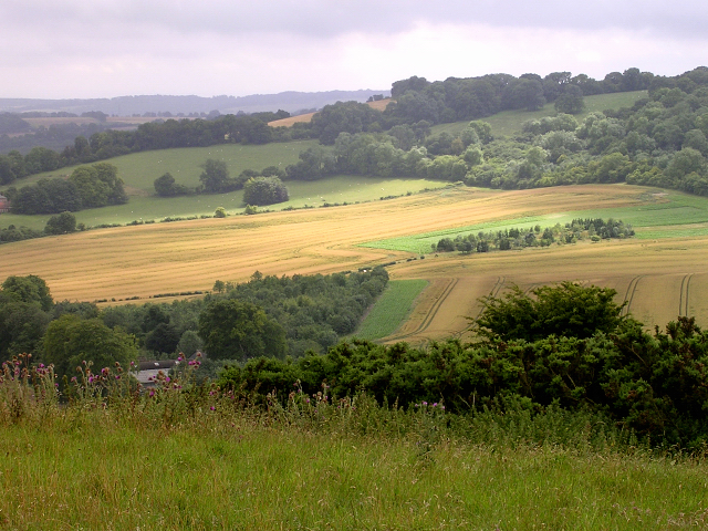 Eastern slopes of Summer Hill, Combe