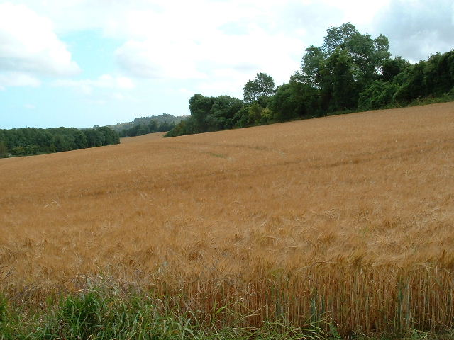 Muntham Farmland