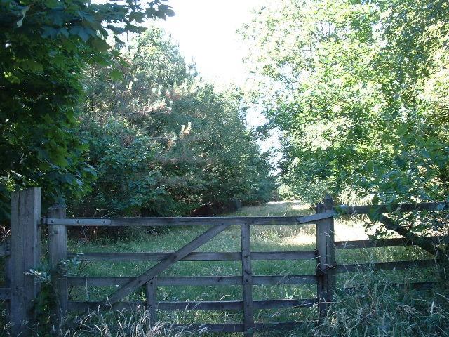 Stockcross Woodland