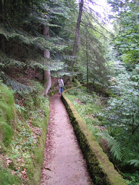 Drumtochty Forest Trail