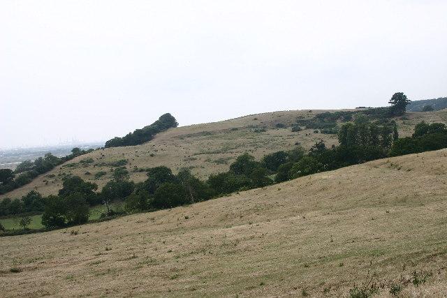 Plumtree Hill
