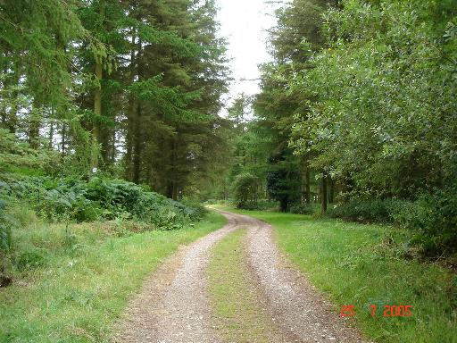 Forestry track at Cwm Coed