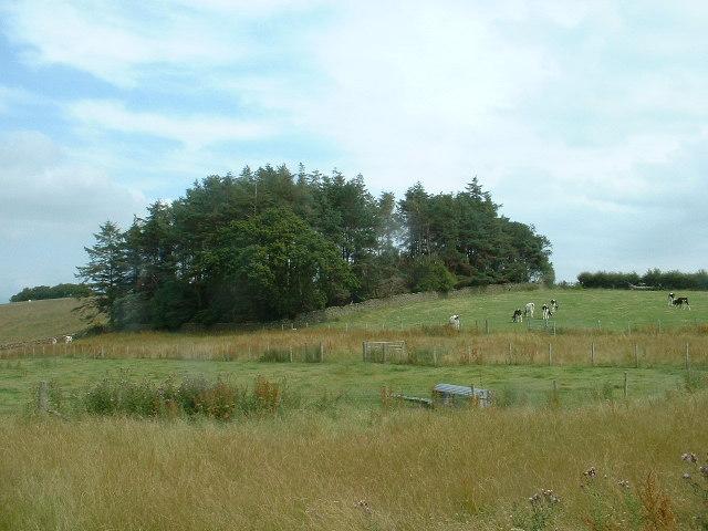 Woodland near Gressingham