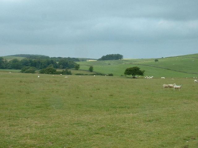 Farmland near Gressingham
