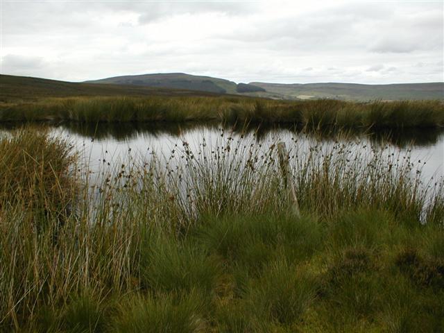 Brian's Pond, Clough Gill Top, Whorlton Moor