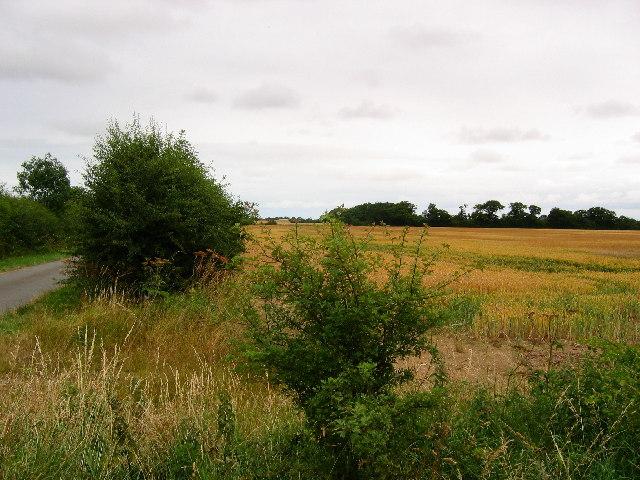 Wheatfield at TA17104483