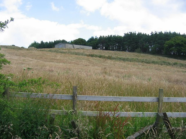 Ungrazed field , Cochno