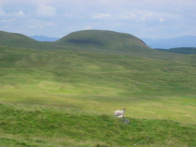 Tegg Lamb