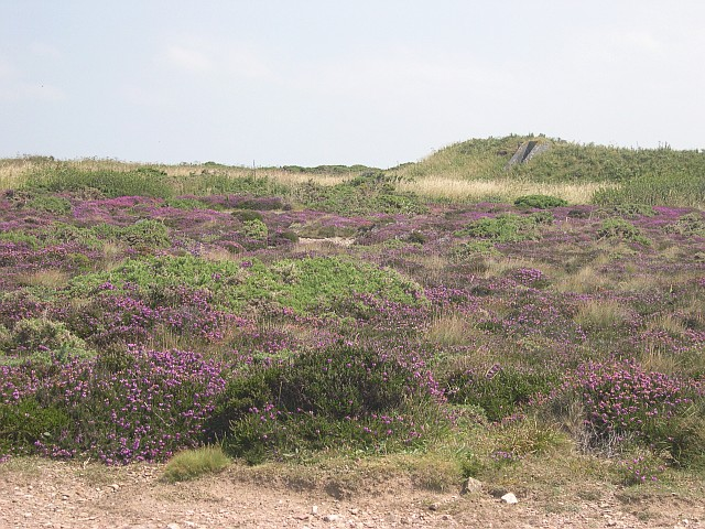 Airfield Heathland
