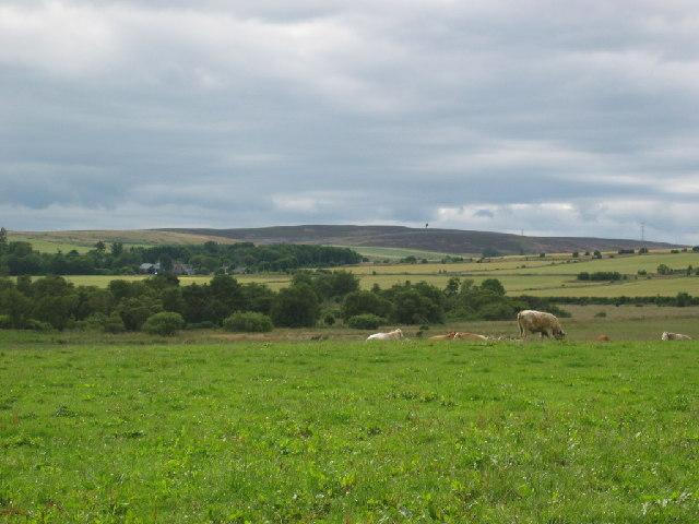 Looking towards Hawkhill Wood