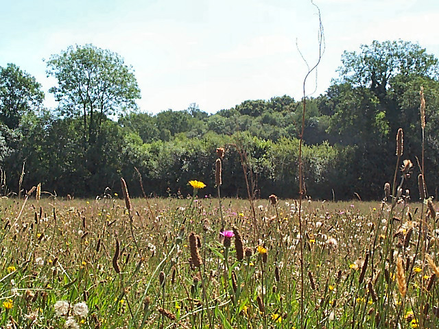 Corfe Mullen Meadow Nature Reserve
