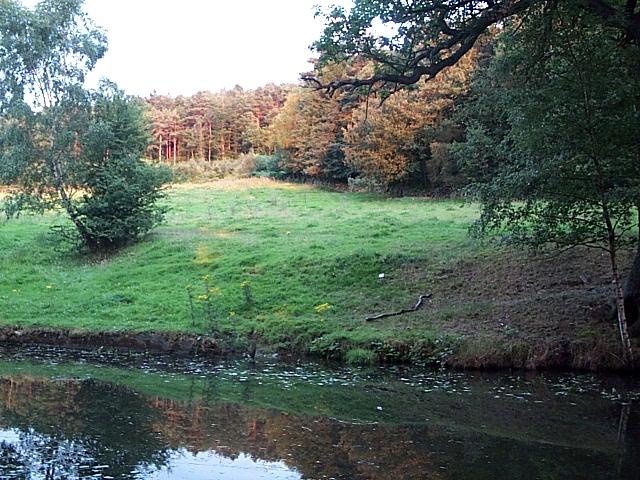 Buck Wood