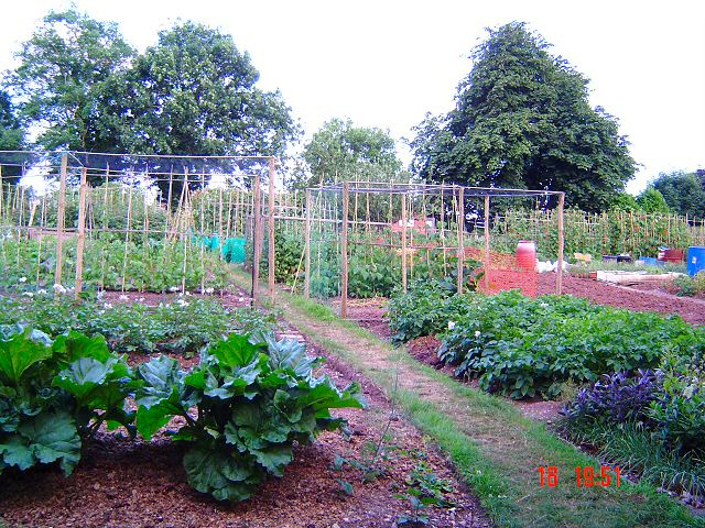 Allotments in Newton Abbot