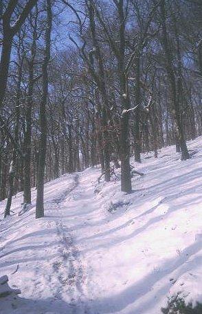 Woods on Craigendarroch