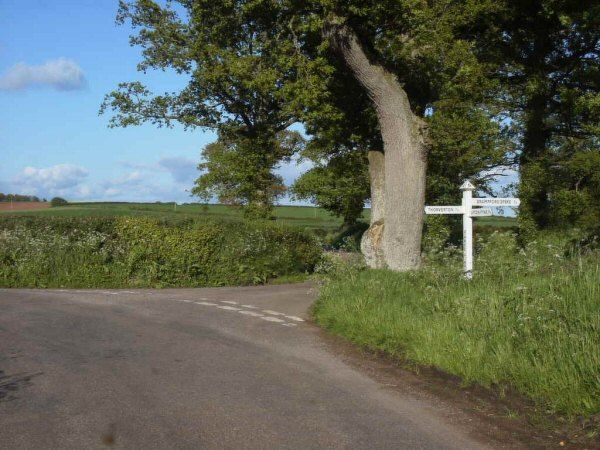 Three-limb Oak on Thorverton-Upton Pyne Road