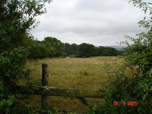 Rough pastureland near Spital