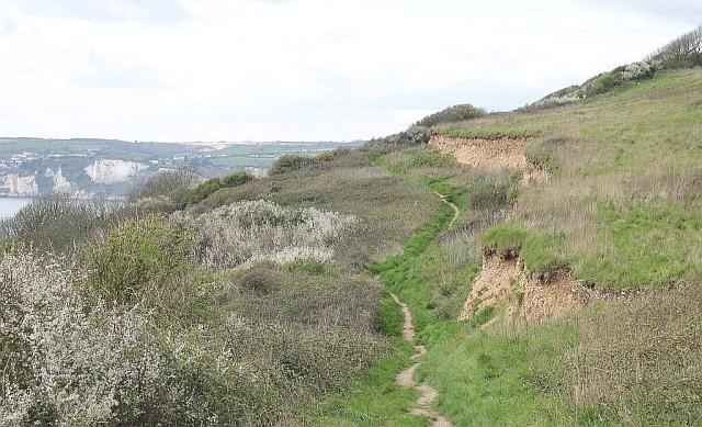 A fresh landslip above Haven Cliff