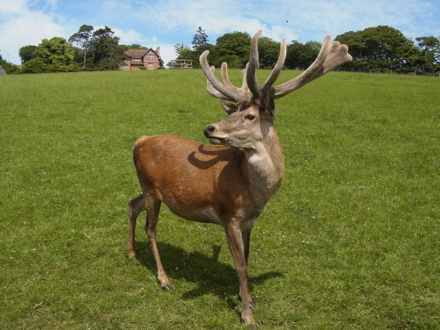 Deer Farm at Cadbury