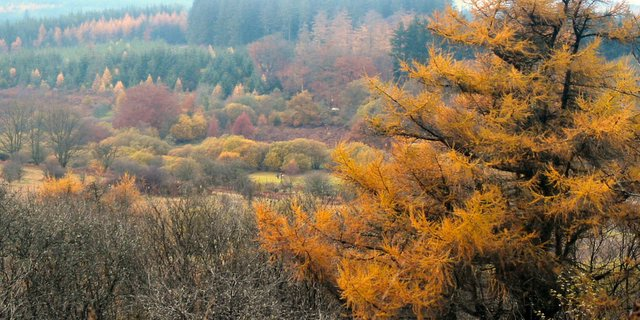 Fernworthy Forest in the Autumn