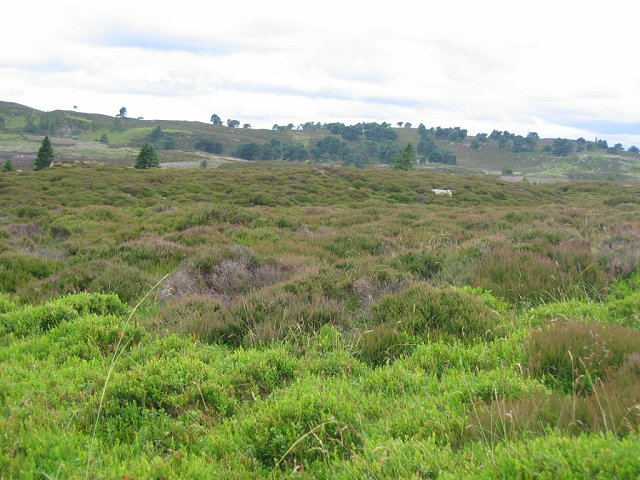 Moorland above Tullimet
