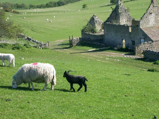 Ruined farmhouse at Bench, Hell Bottom