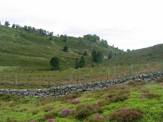 Slopes of Capel Hill