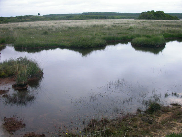 Pond at Hartland Moor