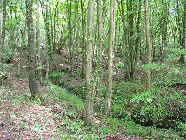 Welland Gill in Mount Noddy Wood, Near Russ Hill, Charlwood, Surrey