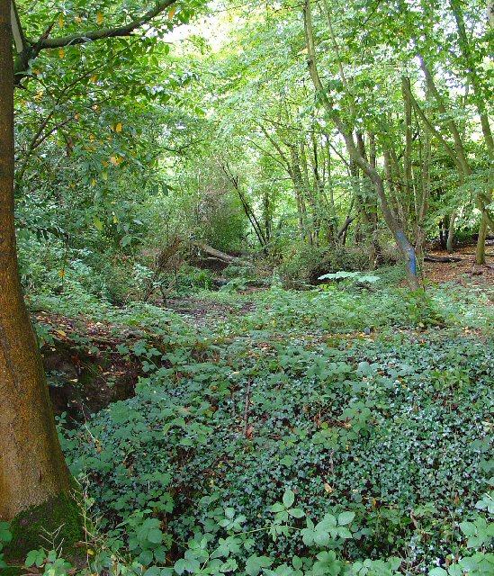 Copse near Waggoners Farm, Russ Hill, Charlwood, Surrey