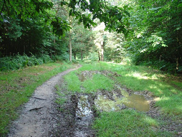 Bridleway through Oldhouse Warren, Near Crawley, West Sussex.
