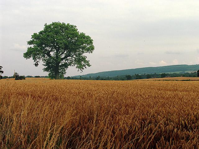Farmland near Bromfield