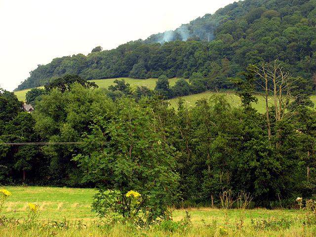 Norton Camp Wood