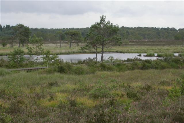 Thursley Common National Nature Reserve
