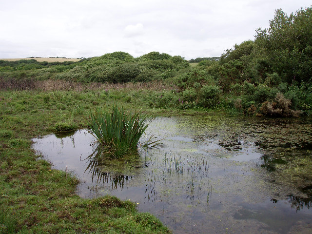 Boggy corner of a field