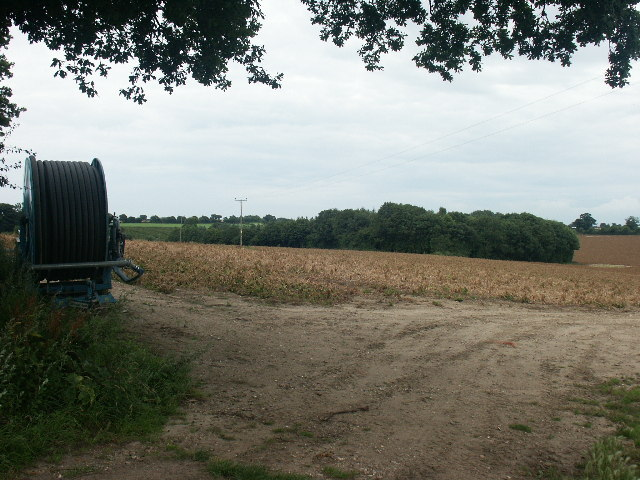 Gravel Pit Plantation, Great Melton