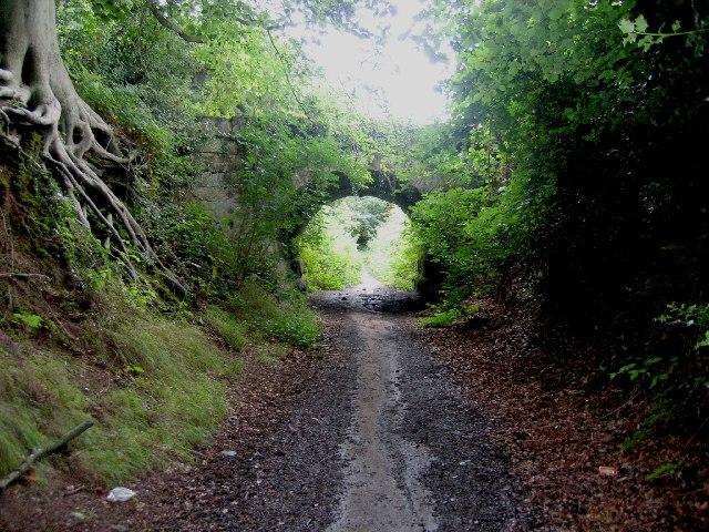 Hidden bridge in Thickthorn Wood