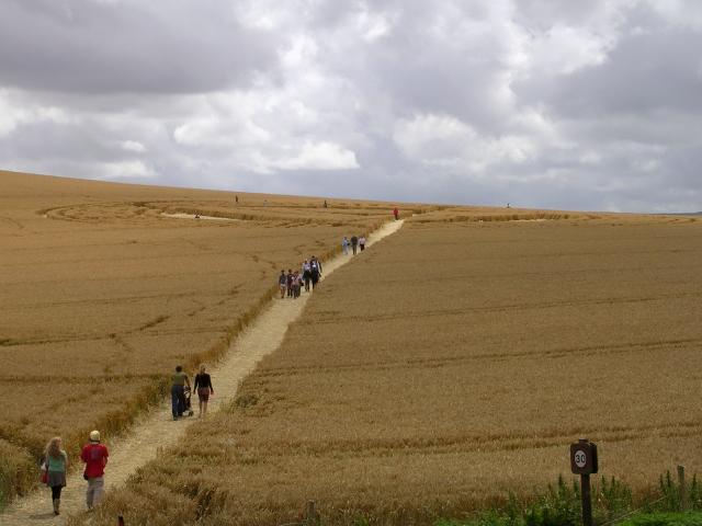 Crop circle south of Avebury henge, Wiltshire