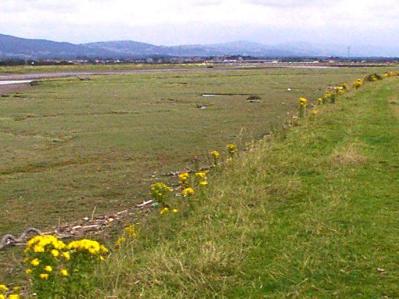 Fields alongside river estuary