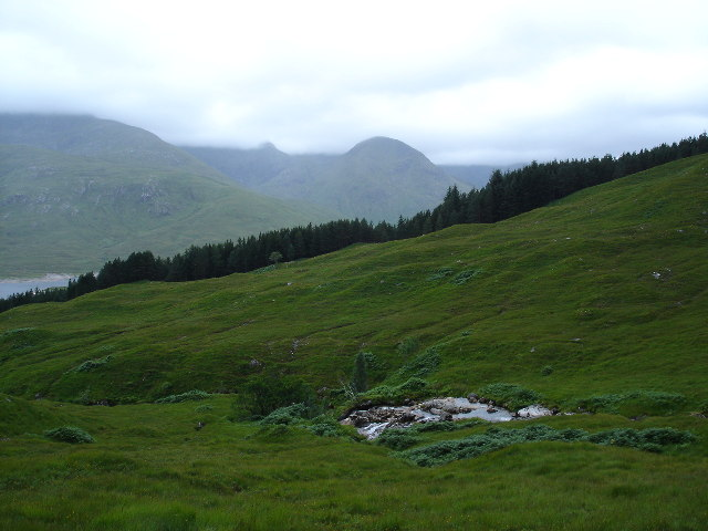Forestry on North shore of Loch Cluanie