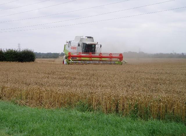 Harvesting wheat near Horningsea