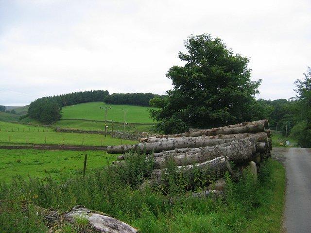 Log stacks, Baddinsgill