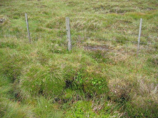 Wet moorland, Byrehope Mount.