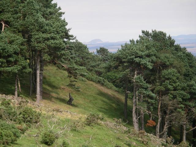 Woods, Woodhouselee