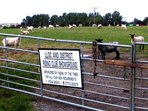 Field used by Lloc & District  Riding Club, and sheep