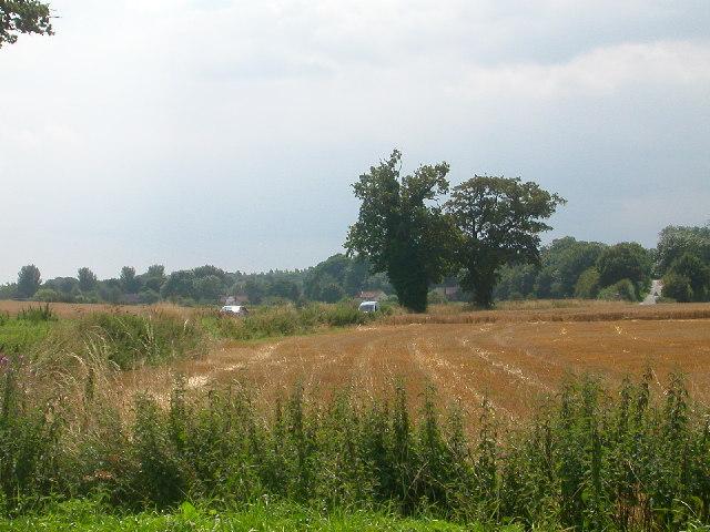 View from the corner of Braydeston Lane looking towards Strumpshaw
